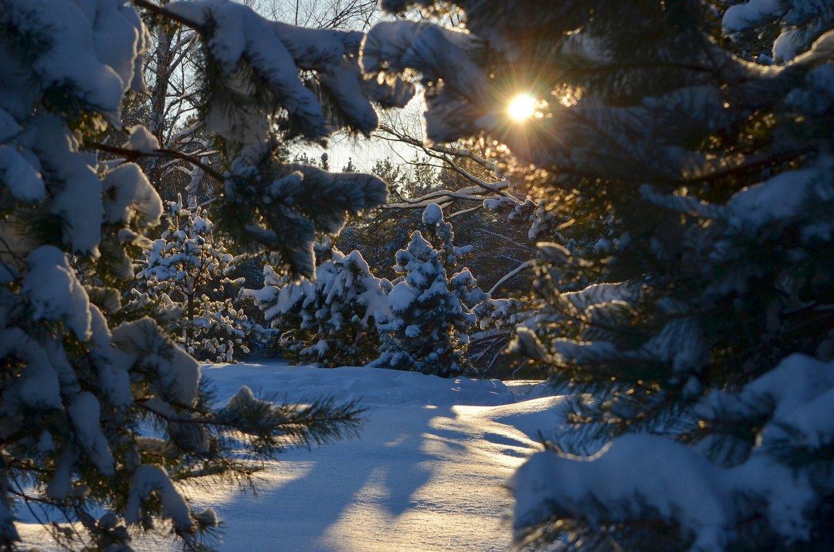 Пришла зима волшебная, как сказка... - Ольга Русанова (olg-rusanowa2010)