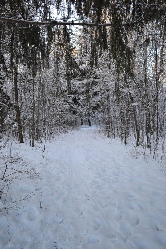 в лесу - Светлана