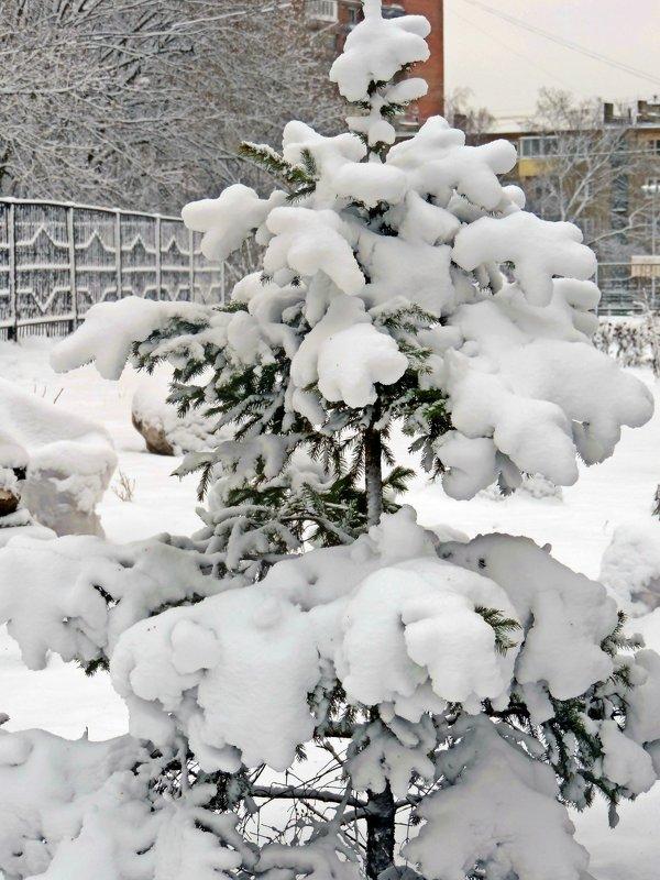 Под снежной шубой - ivolga