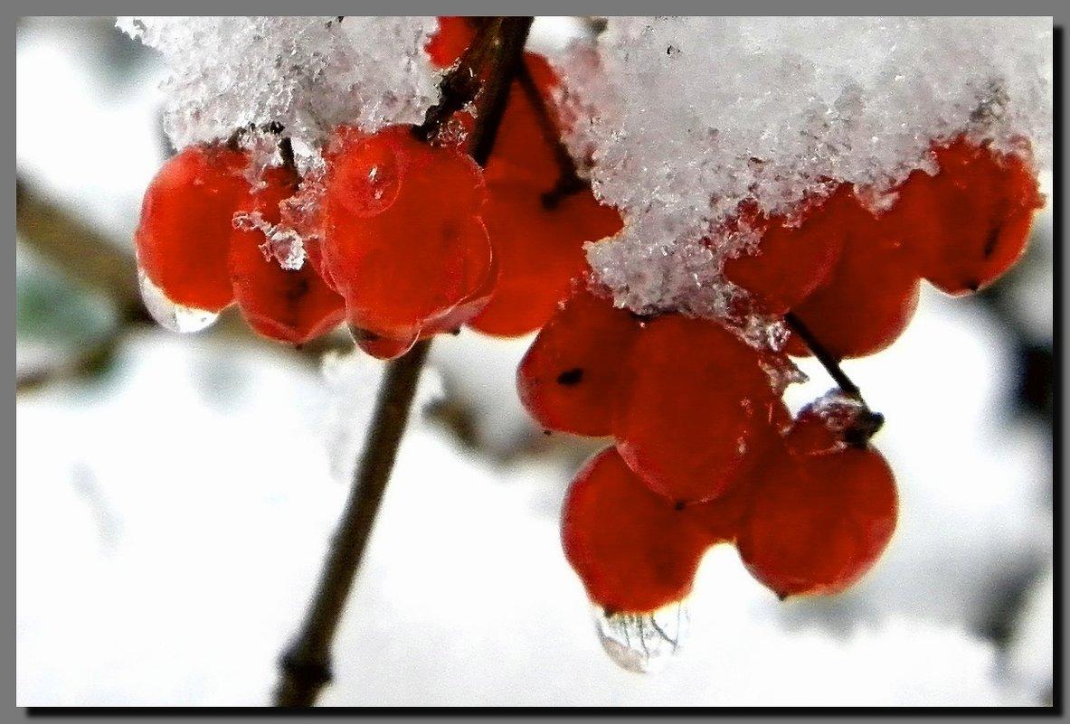 осень - зима. - Ivana