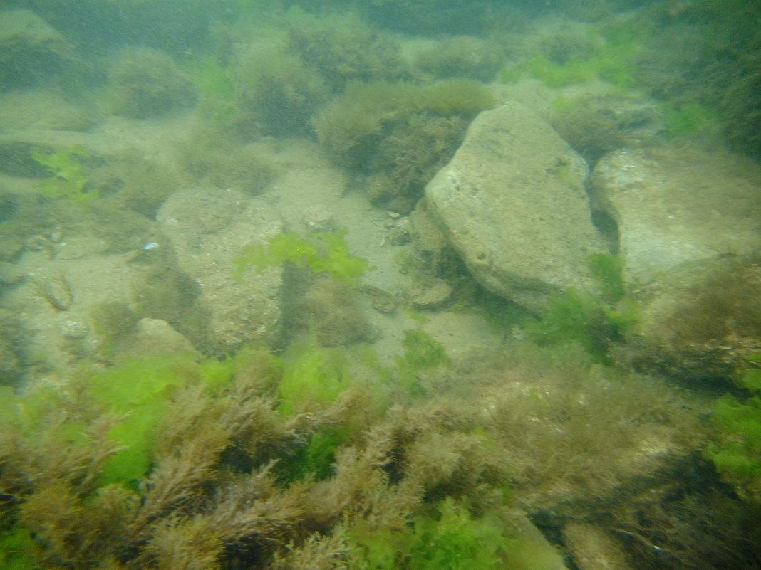 Отдых на море, Крым. Скнорлинг. Подводные пейзажи-82. - Руслан Грицунь