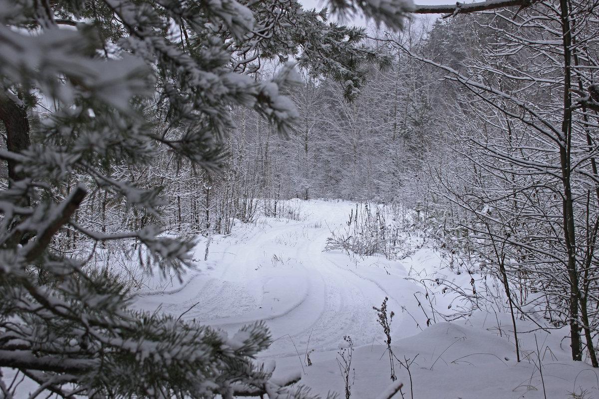 зимняя дорога - оксана