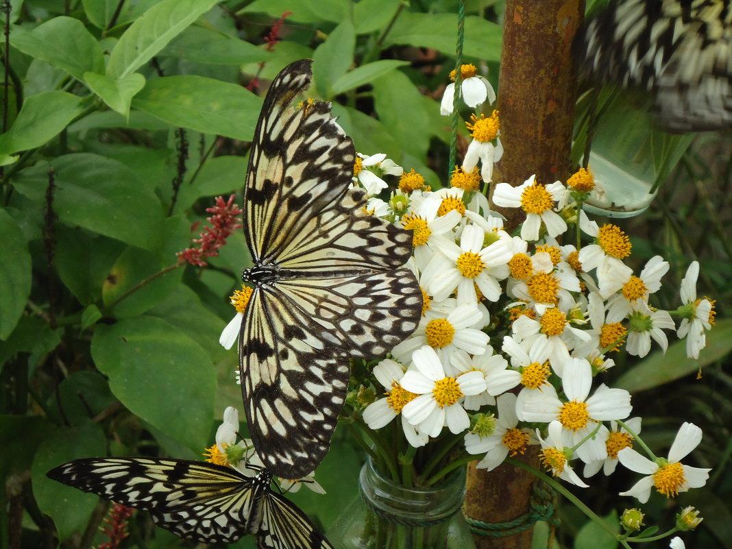 Бабочка - Валерий Murr