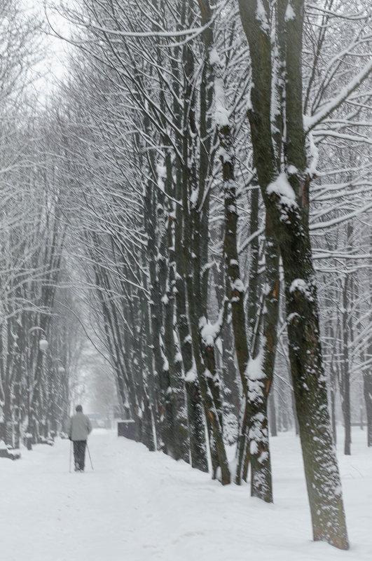 Зимний парк... - Елена Фролкова