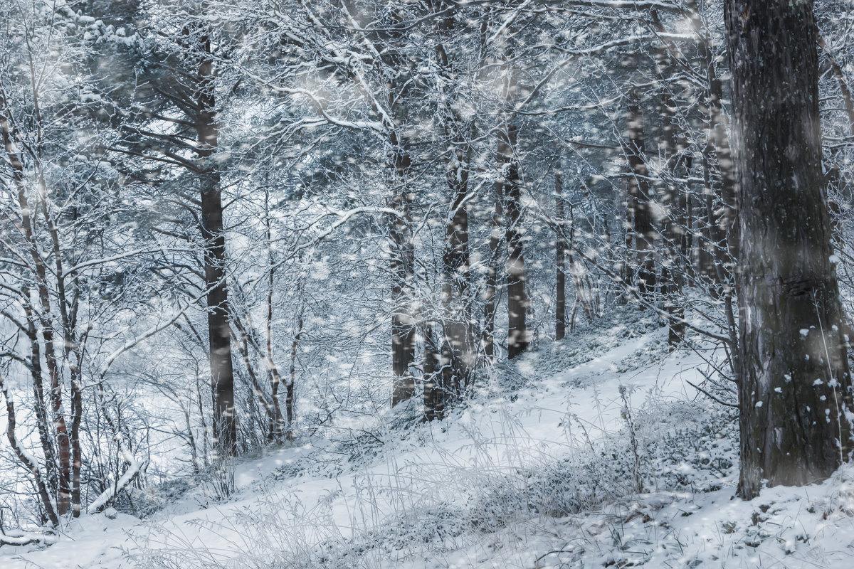Снежная осень - Ольга