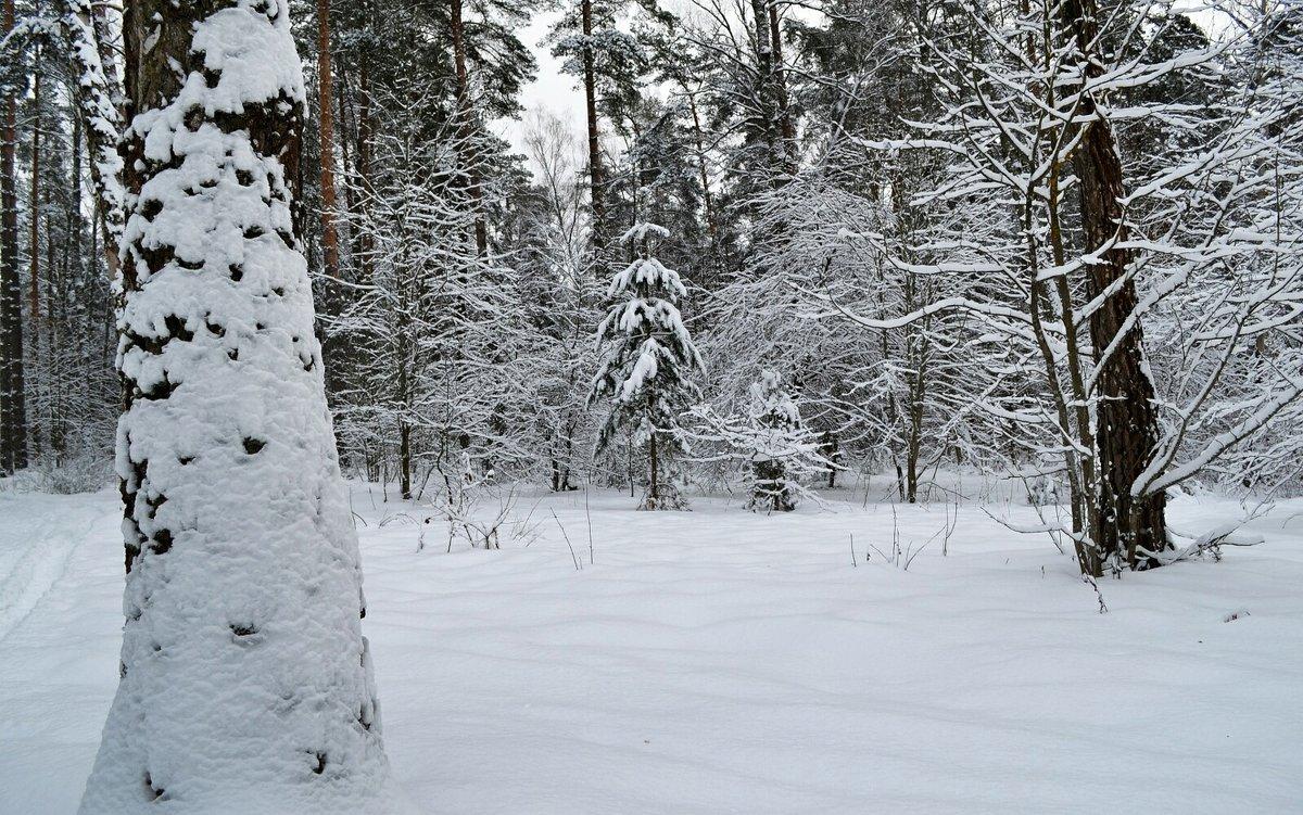 Зимний лес - Милешкин Владимир Алексеевич