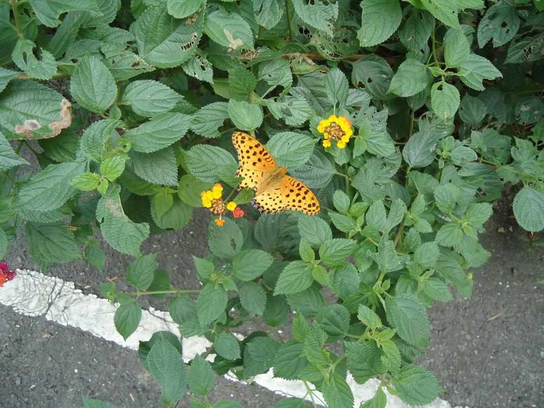 На бабочку похожа - Валерий Murr