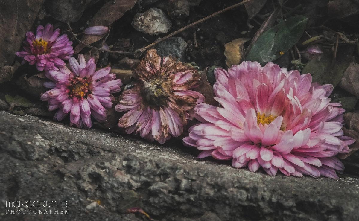 Немного весны в зимнюю стужу - Маргарита Б.