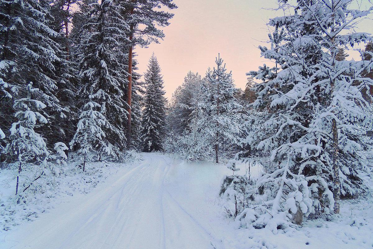 Зимними дорожками - Павлова Татьяна Павлова