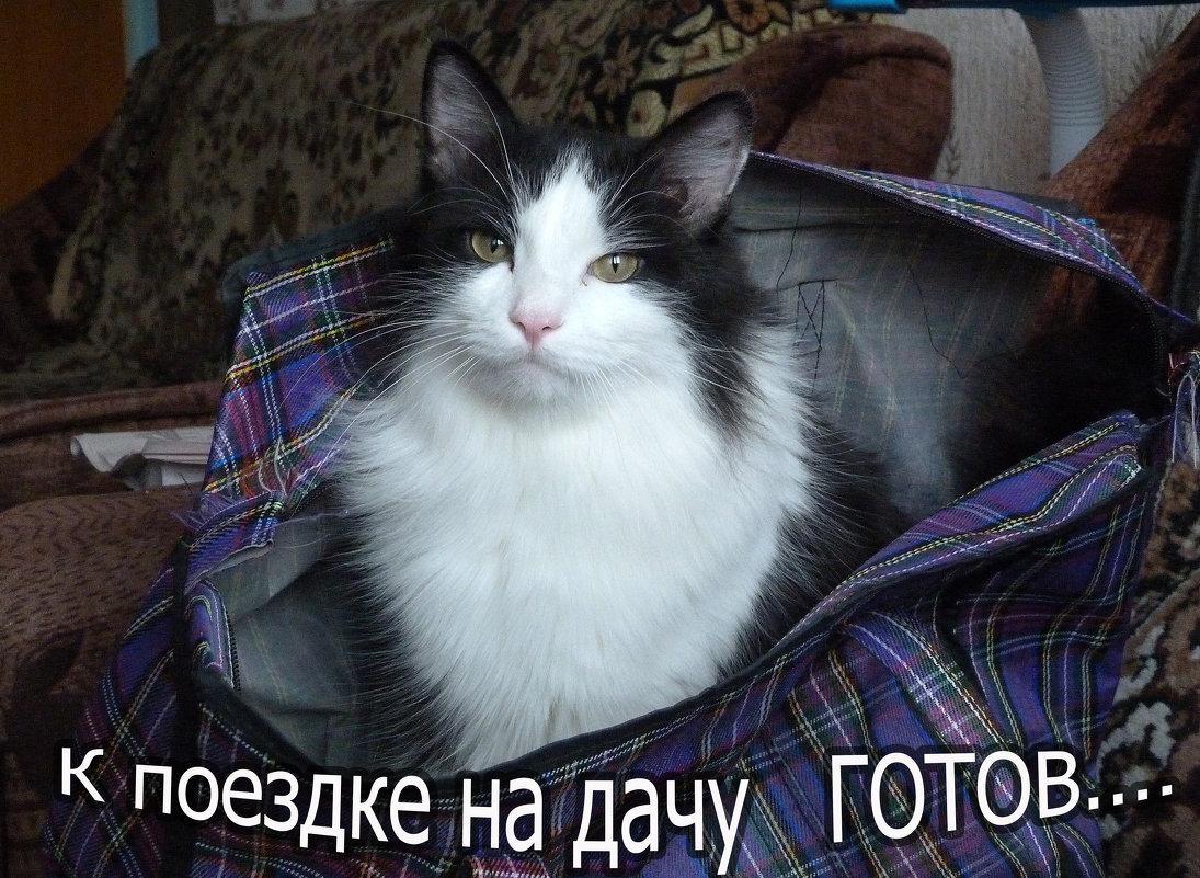 ..... - александр дмитриев