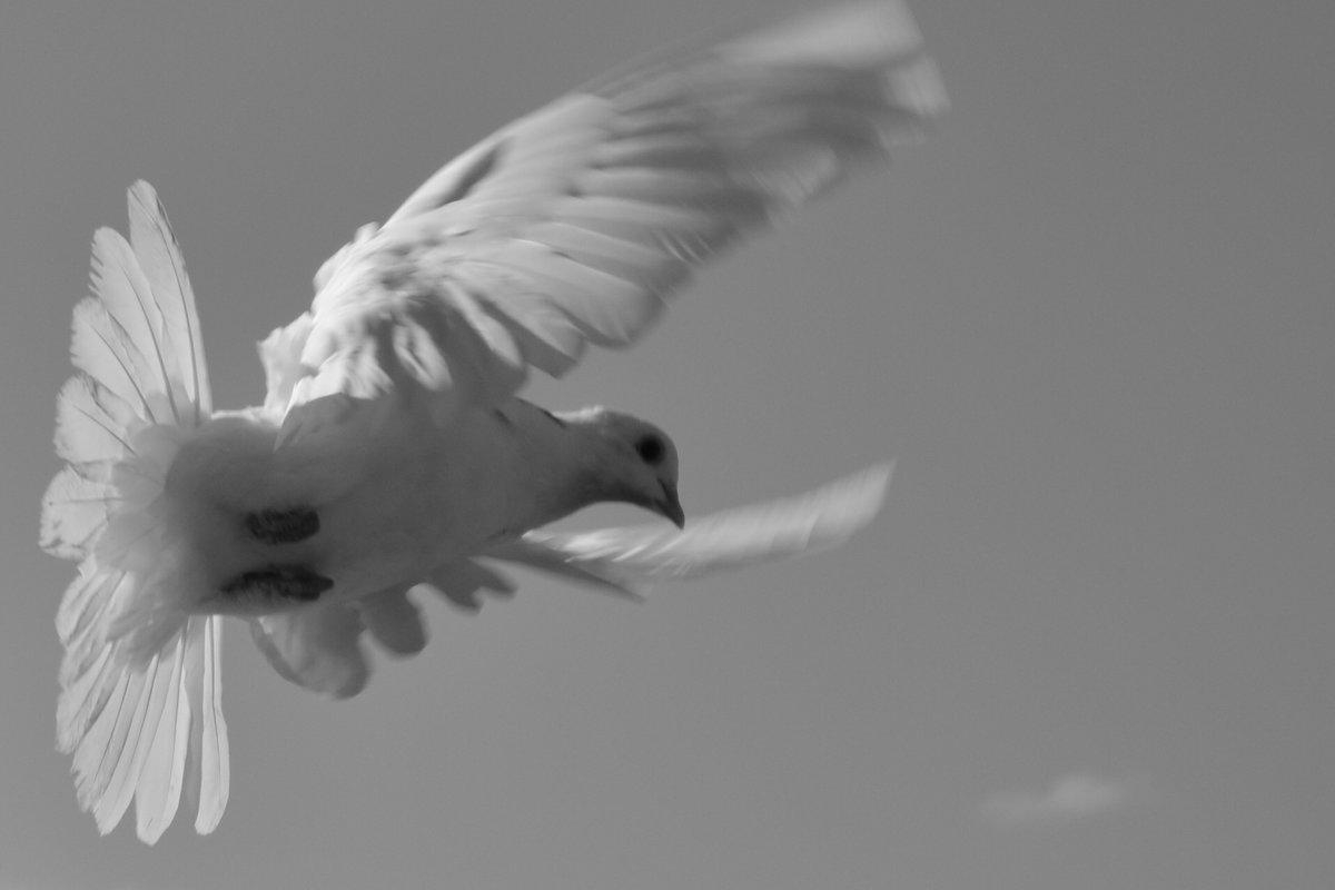 голубь - Arshak Badalyan