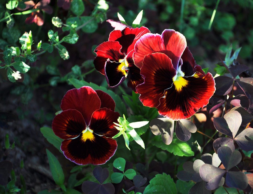 Цветы - Liudmila Antonova