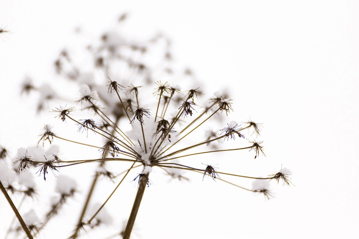 Зимний цветок - Александр