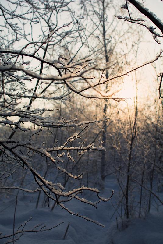 Маленький лес - Михаил
