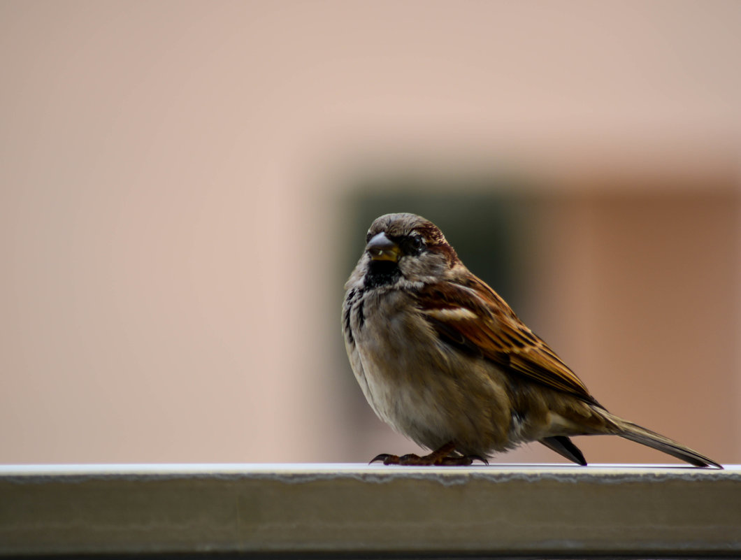 Bird - Мария Цечоева
