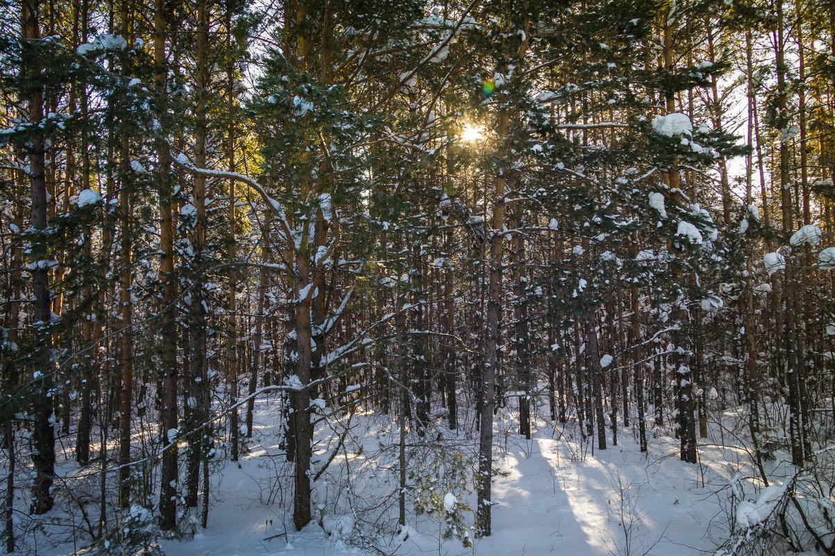 Зимний лес - Сергей Говорков