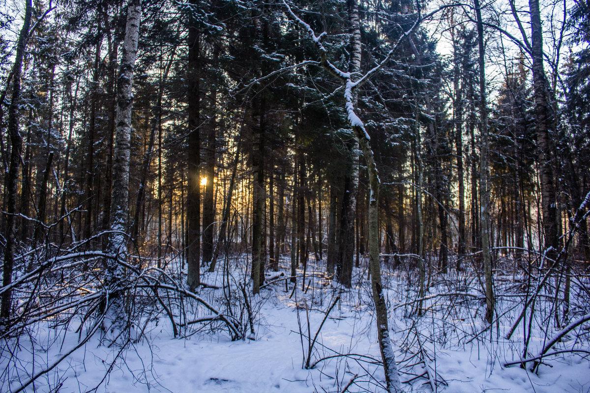 Зимние картинки - Алёнка Шапран
