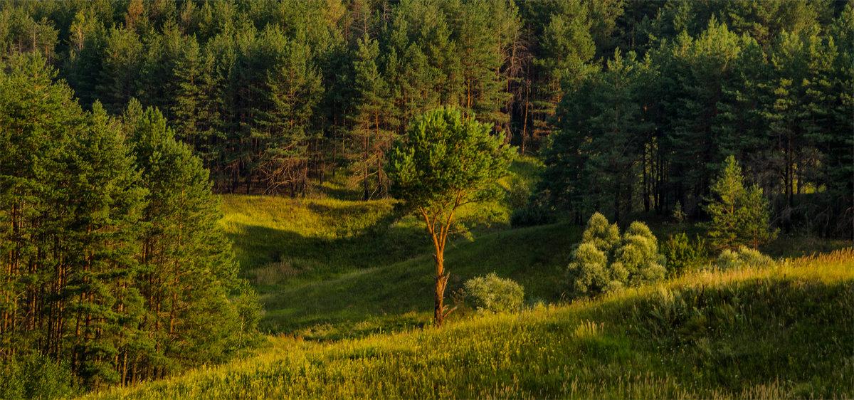 Вечер в лесу - Александр Березуцкий (nevant60)