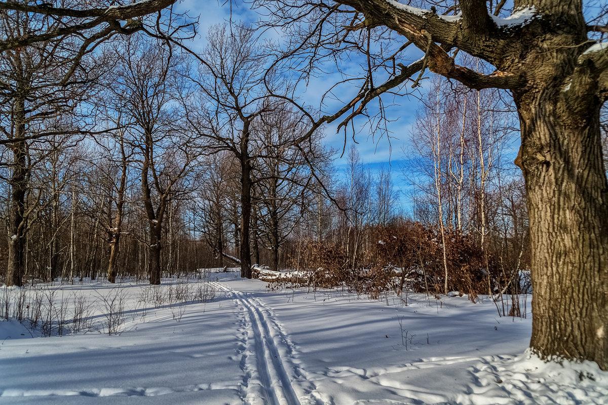 Лыжня через дубовую рощу - Андрей Дворников