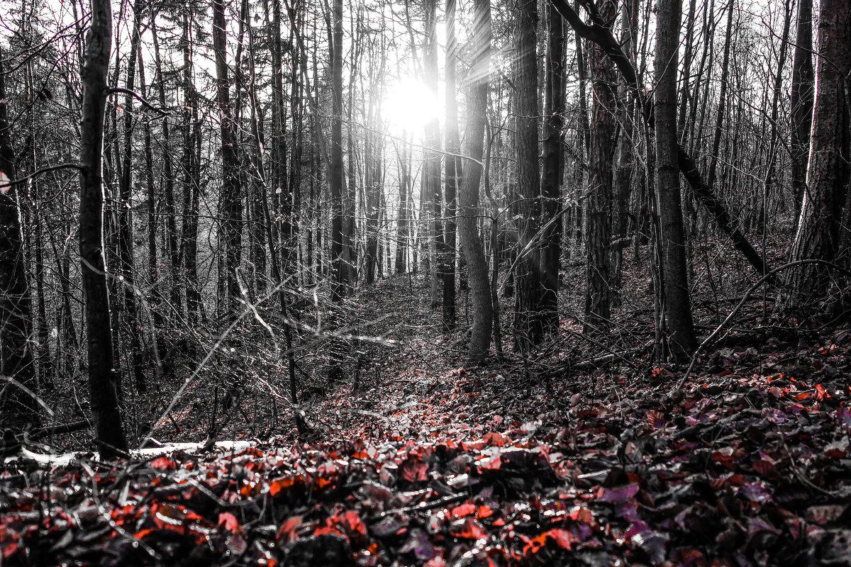 Александр селезневы лес