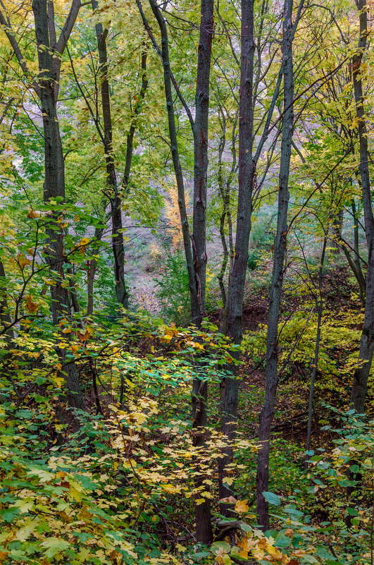 Осенний лес - Александр Березуцкий (nevant60)