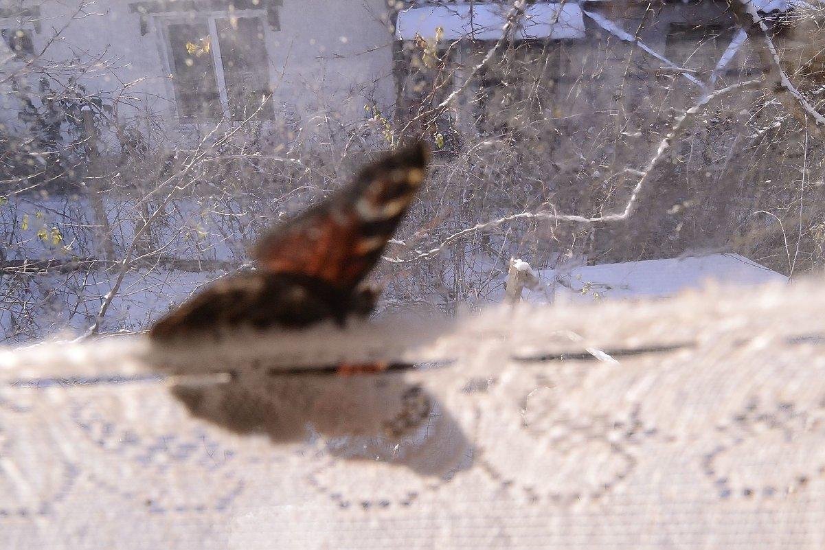 зимняя бабочка - Бармалей ин юэй