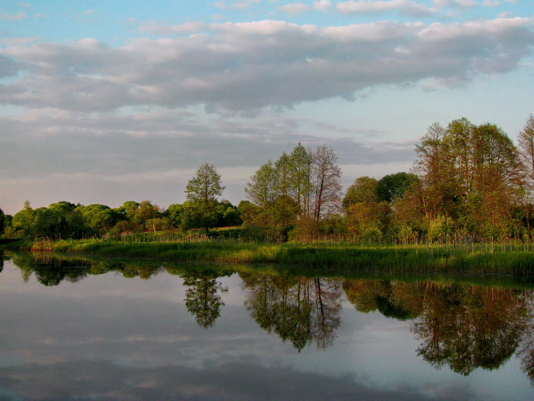 Узкая полоска леса на берегу реки - Лара Симонова