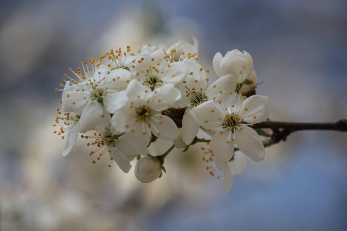 Весна пришла-6. - Руслан Грицунь