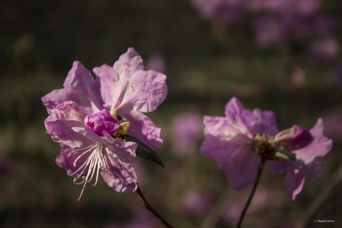 Яркий цветок. - Svetlana