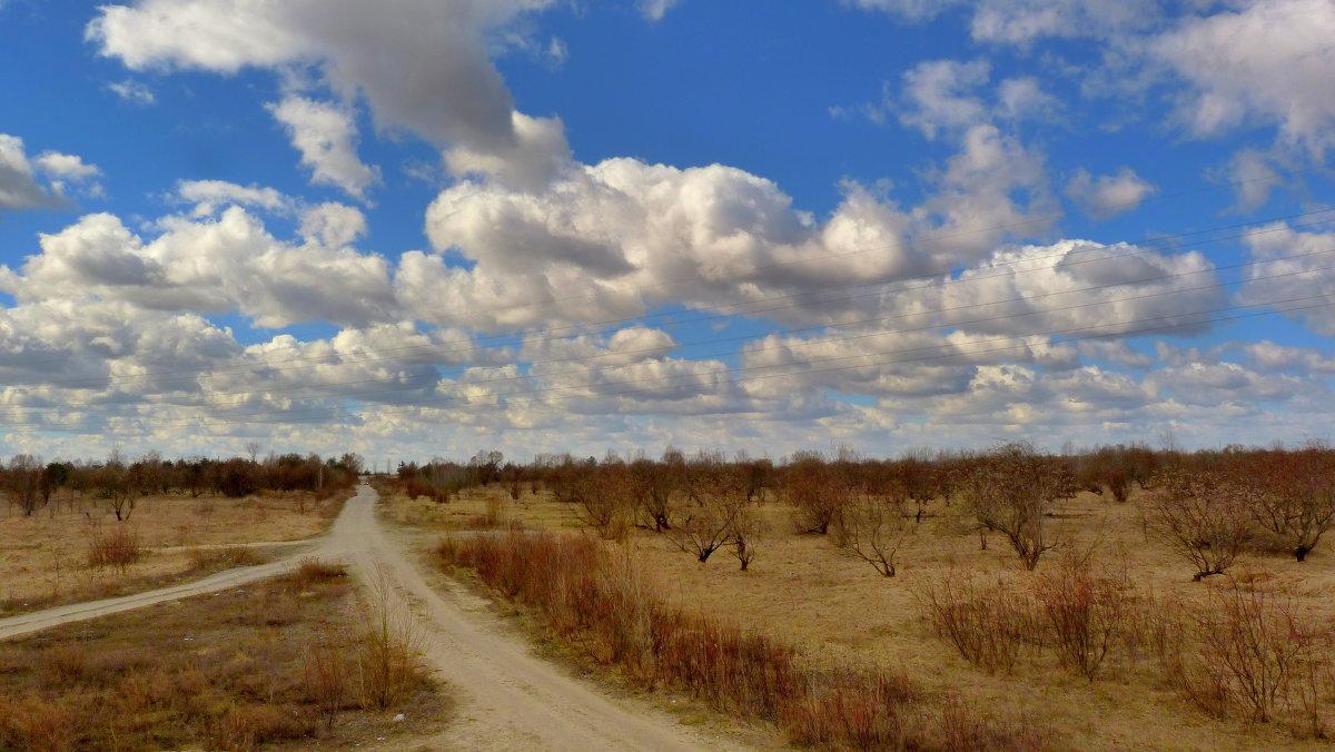 полевая дорога в марте - Александр Прокудин