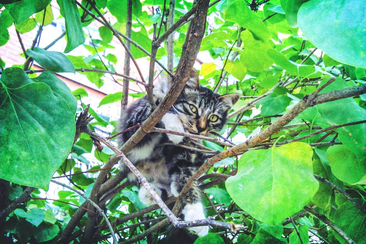 Что удивляешься, удобно мне...гнездо у меня здесь... ГНЕЗДО!!!))) - Арина