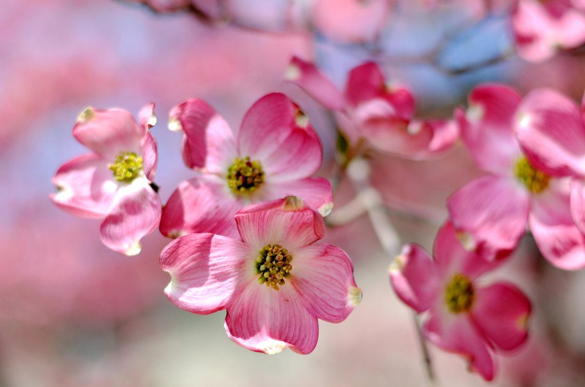 Весенние цветы - Марина Романова