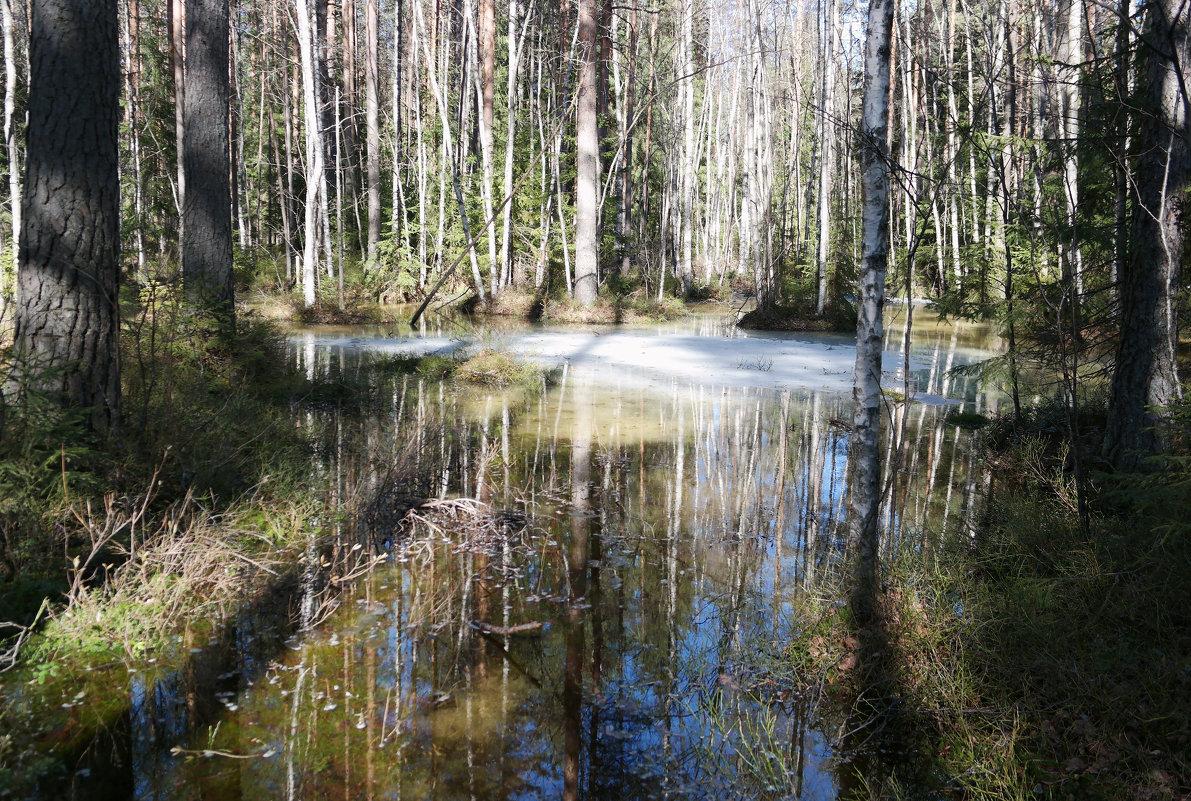 Лесное болото - Aнна Зарубина