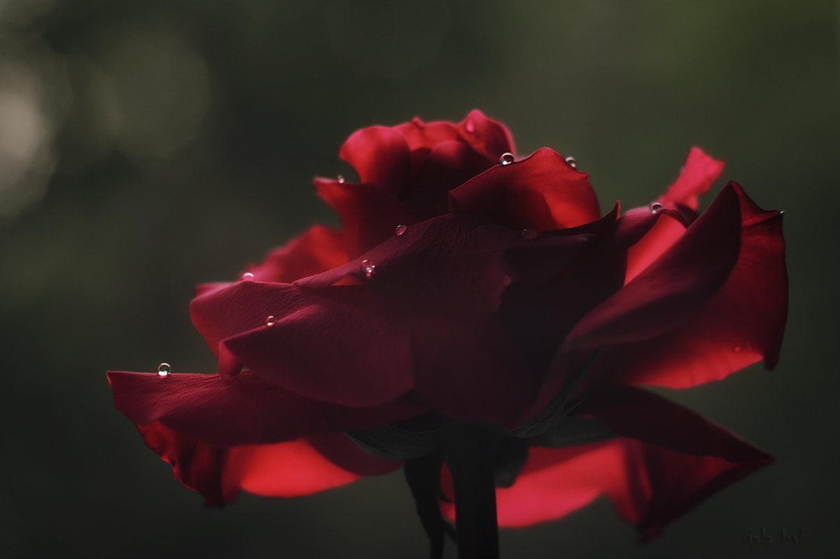 фламенко - Gala *