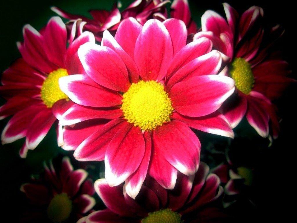 цветы - Горкун Ольга Николаевна