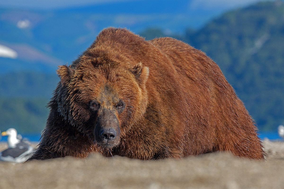 Медведь Гора - Денис Будьков