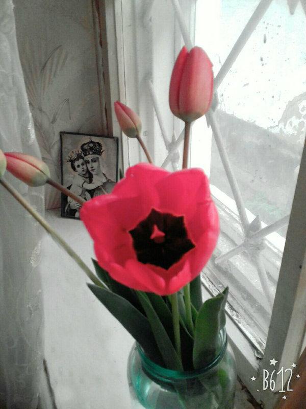 Тюльпан - Настя