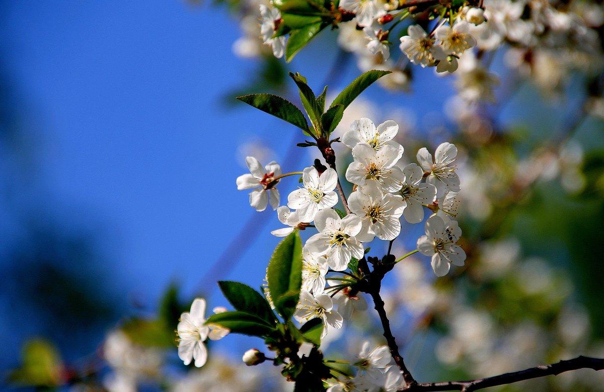 А весна так  и  снится.. - Валерия  Полещикова