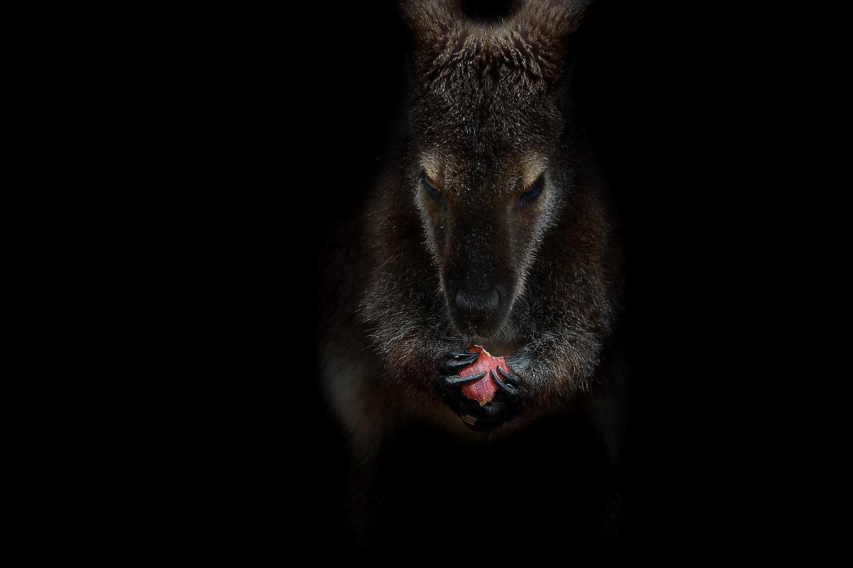 vit5  кенгуру - Vitaly Faiv