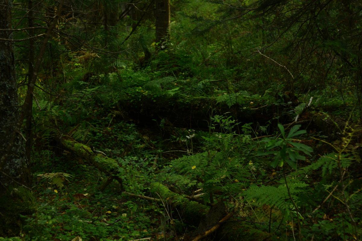 Лесные пороги - Алексей Коган