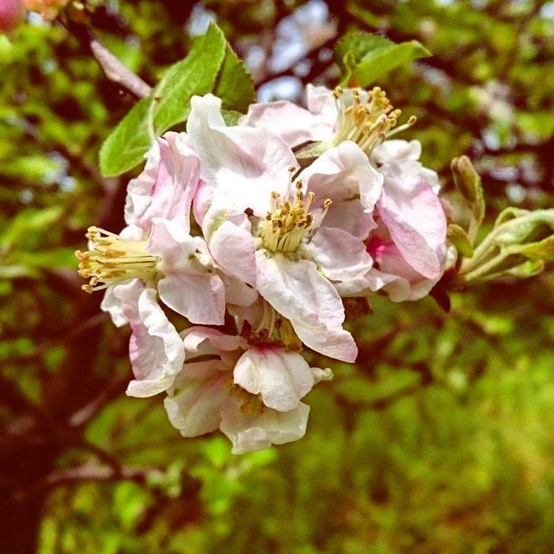 и всё-таки весна! - Ольга Богачёва
