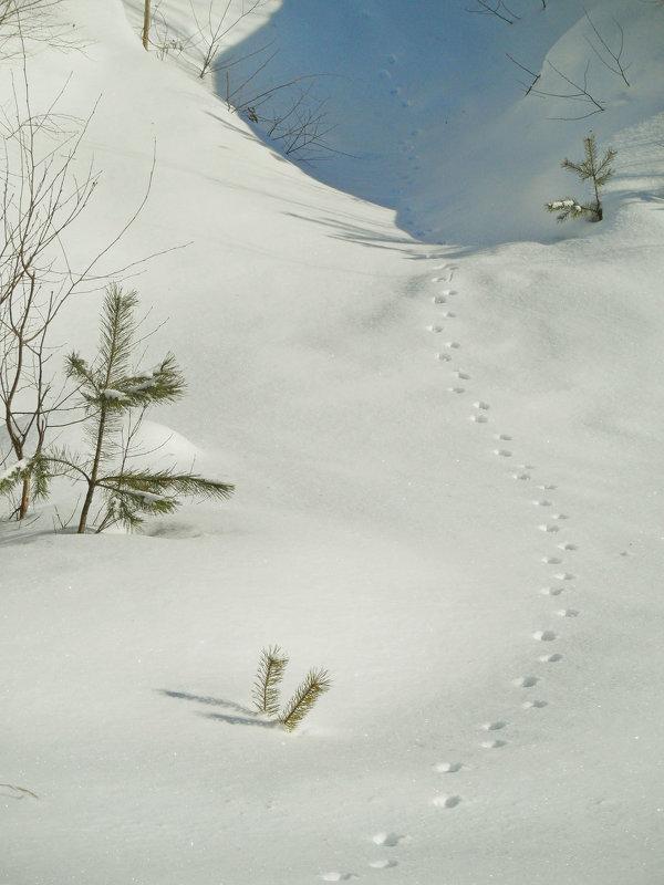 Следы на снегу.... - Юрий Цыплятников