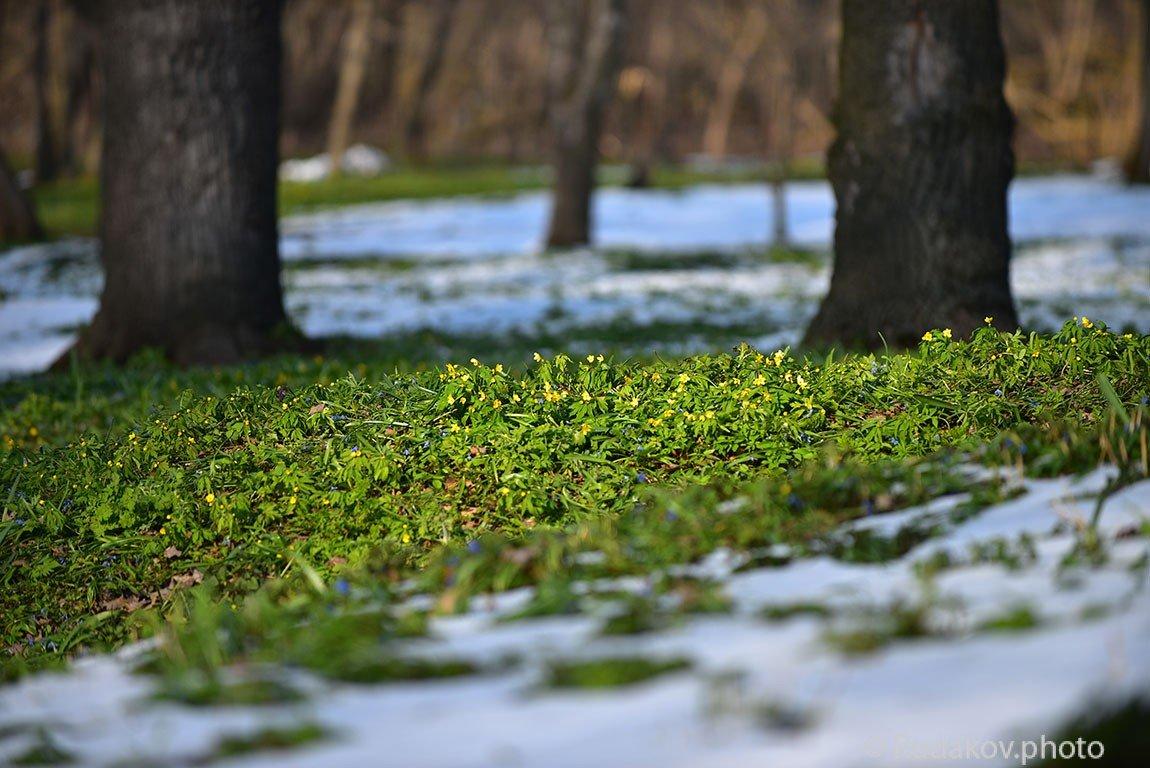 Весны прекрасной торжествующий финал - Сергей
