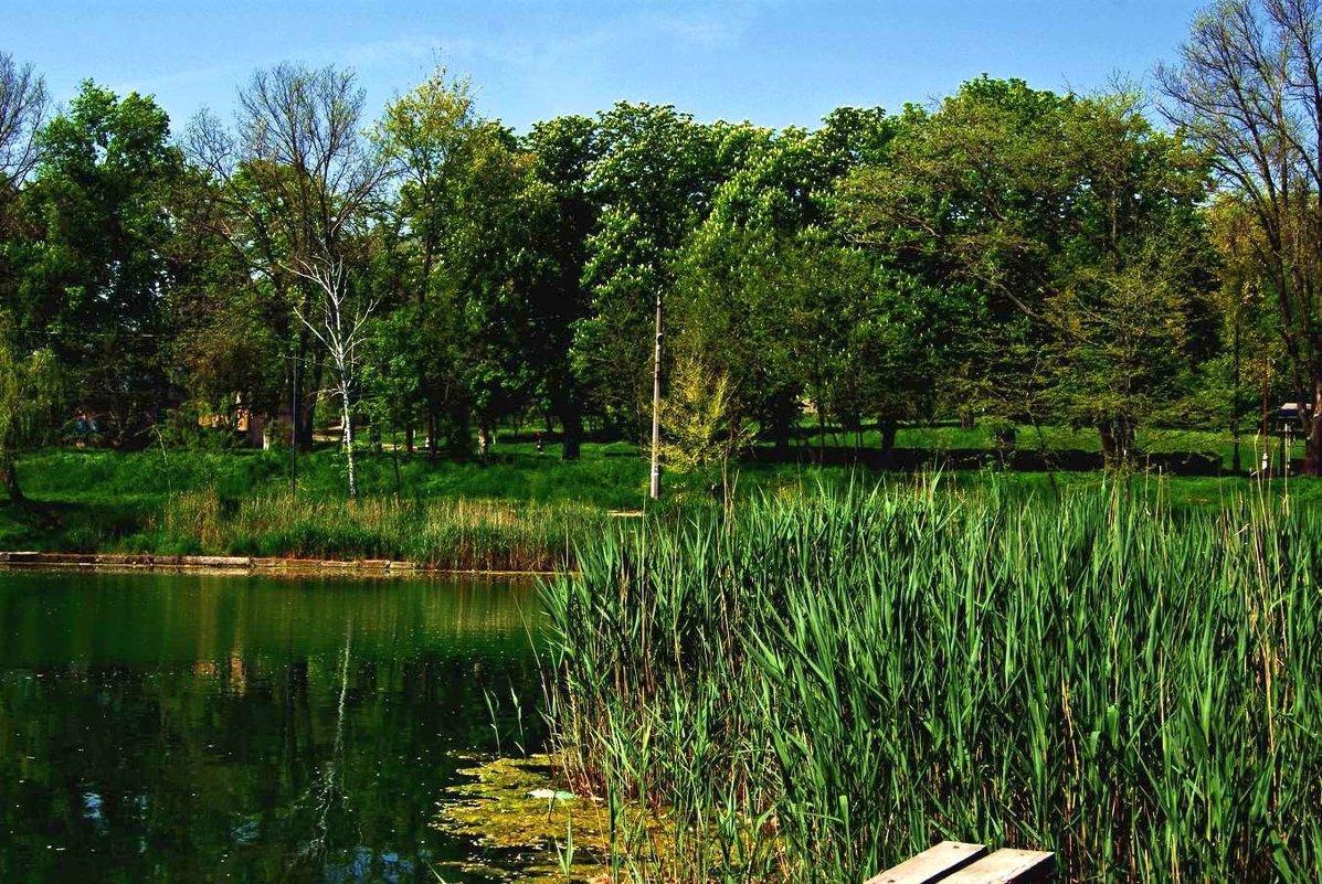 пруд в Дюковском саду - Александр Корчемный