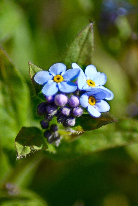 Не много о цветах в апреле... - Михаил Болдырев