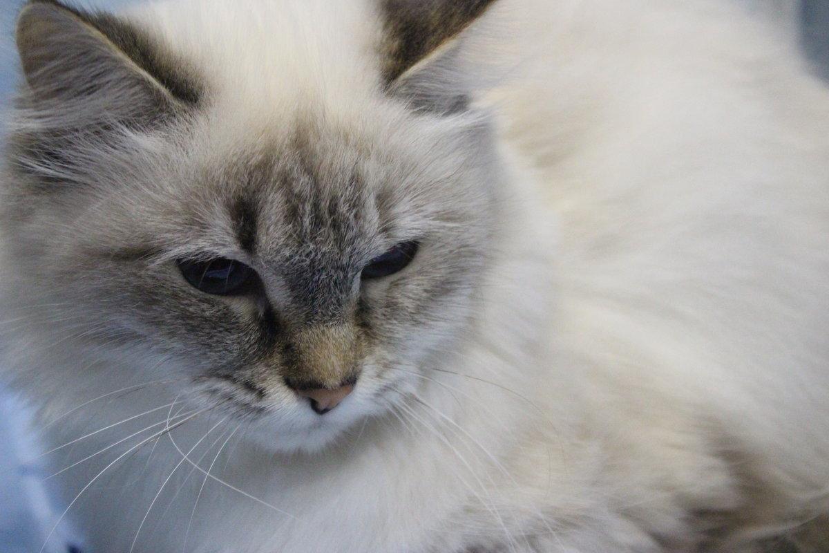 Гламурная кошка - Анастасия Рябкова