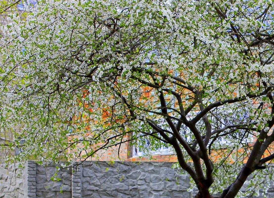 И запели птицы разными ладами, как и мы, любуясь майскими садами. - Валентина ツ ღ✿ღ