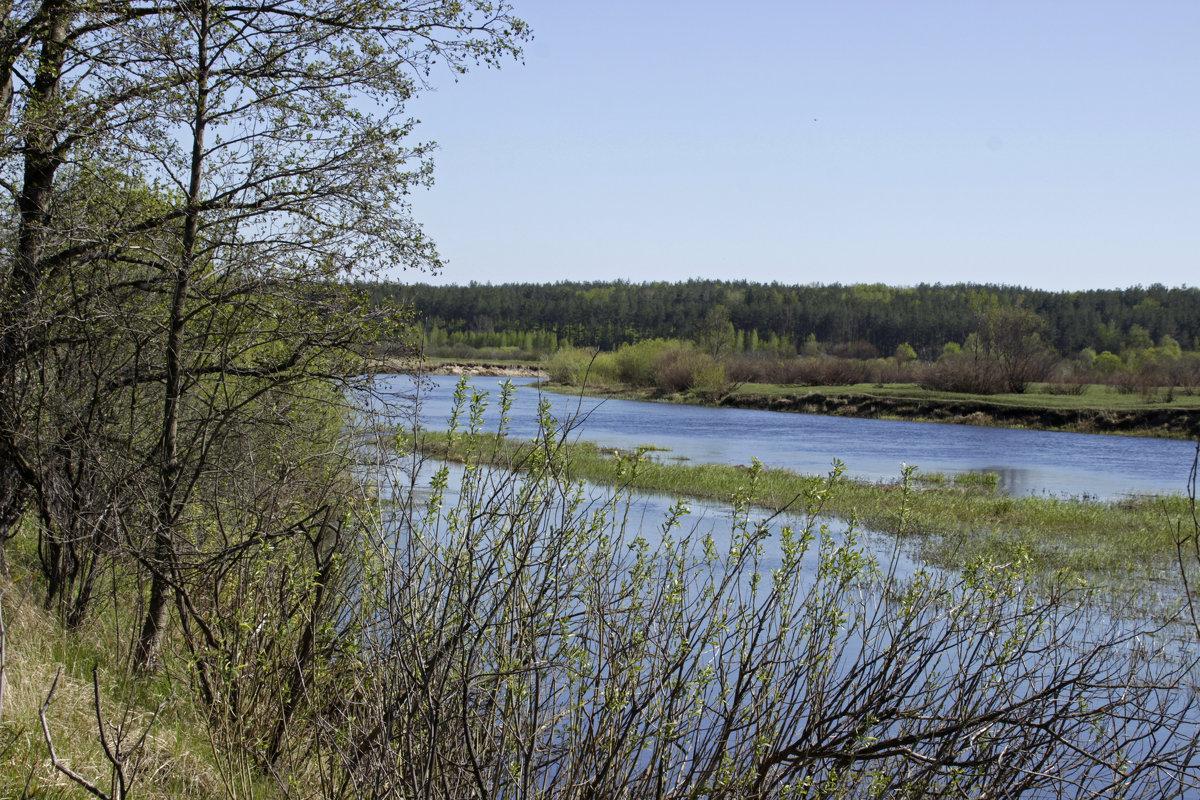 заводь у реки - оксана