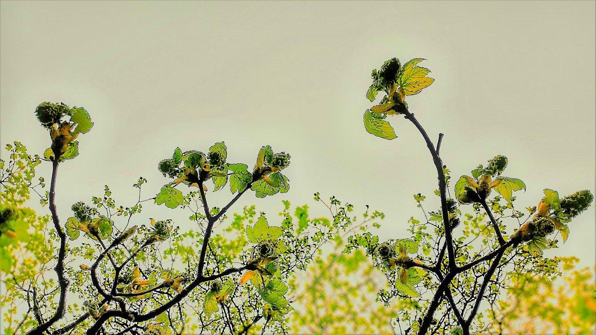 Апрельский этюд - Валерий Розенталь
