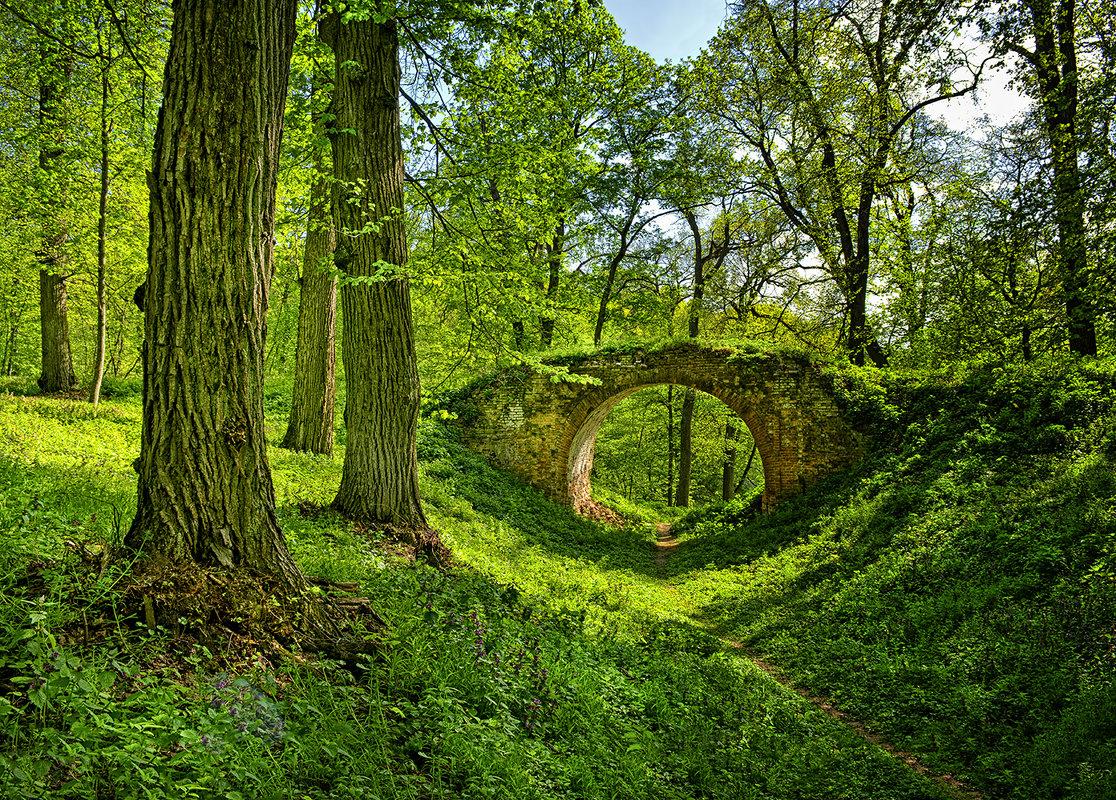 ...если в лесу ходить тайными тропами... - Александр Бойко